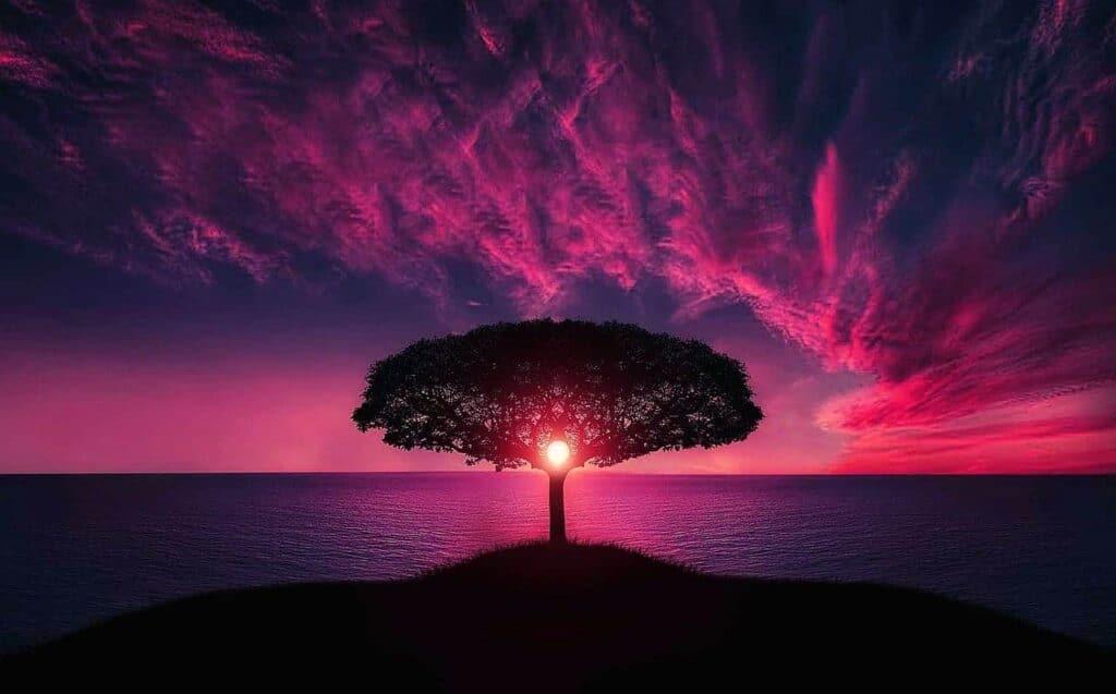 représentation d'un éveil spirituel et kundalini, paysage d'un arbre devant le soleil